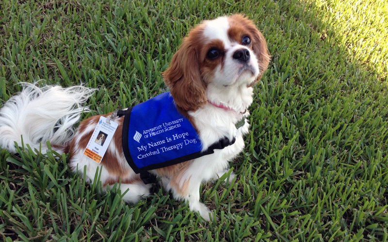 Therapy Dog Training Orlando